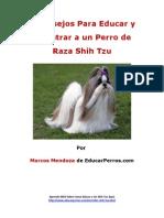 4 Consejos Para Educar y Adiestrar a Un Perro de Raza Shih Tzu (1)