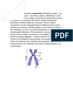Cromosoma encho