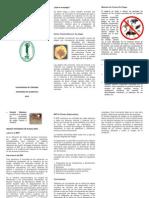 Influencia de Las Plagas en La Industria de Alimentos