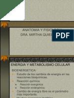 enzimas_metabolismo.ppt