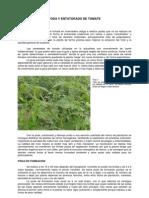 1_poda_y_entutorado_del_tomate.pdf