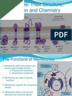 Plasma Membrane(Edited)
