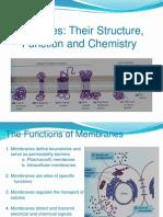 Plasma Membrane FINAL