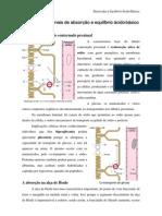 Mecanismos renais de absorção e equilíbrio ácido-básico