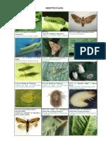 Insectos Plaga Beneficos Enfermedades