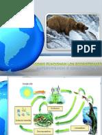 Proceso en Los Ecosistemas