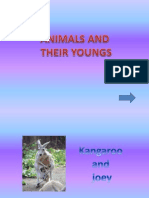 Animals n Their Young