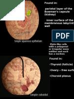Histology Slides