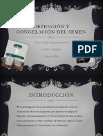 Obtencion y Congelacion Del Semen (Laura Vallejo, Cindy Gonzalez y Laura Cajamarca)
