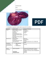 Patologia veterinaria