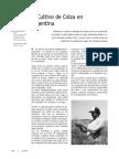 Colza01 - Iriarte y Valetti 2002