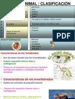 animalesclasificacion-091127184057-phpapp02