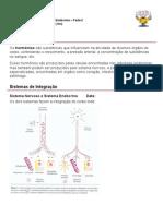 Sistema Endócrino Parte 2