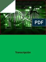 Traduccion y Trancripsion Del Adn