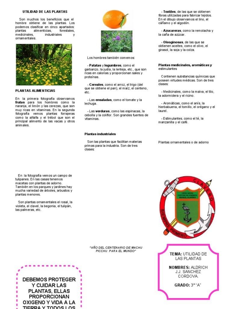 Triptico plantas for Que son la plantas ornamentales
