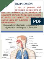 Mecanismo de La Respiracion