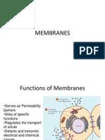 Cell Membrane 1