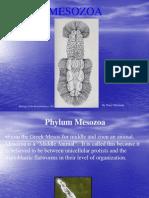 Phylum Mesozoa