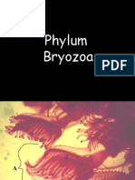 Phylum Bryozoa