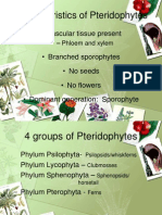 Characteristics of Pteriodphytes