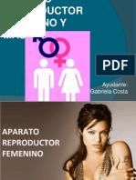 APARATO-REPRODUCTOR4