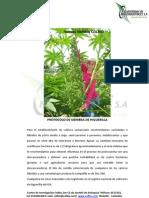 4 Protocolo de Siembra Higuerilla