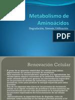 1-MetabolismodeAminoacidos