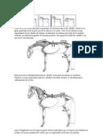 Biomecánica del caballo