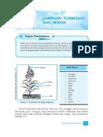 2. Jaringan Hewan Dan Tumbuhan