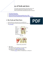 Anatomy of Teeth and Jaws