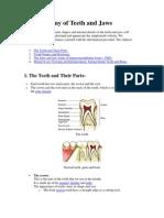 Anatomy of Teeth and Jaws