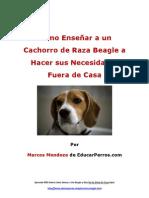 Como Enseñar a un Cachorro de Raza Beagle a Hacer sus Necesidades Fuera de Casa
