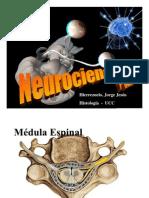 neurocienci