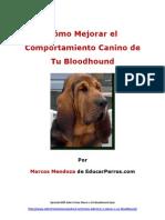 Cómo Mejorar el Comportamiento Canino de tu Bloodhound
