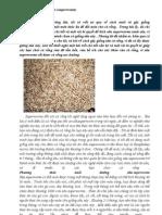 kỹ thuật nuôi sâu gạo