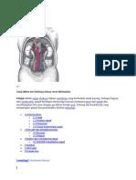 Tekanan Darah Tinggi Dan Penyakit Ginjal
