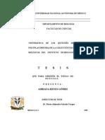 (TESIS) Reyes-Gómez Adriana, 1999; Sistematica de los Quitones (Mollusca:Polyplacophora) de la Coleccion Nacional de Moluscos del Instituto de Biologia, UNAM