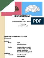 Neuroanatomi Aries