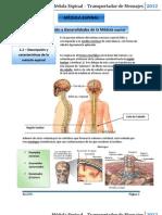 Médula Espinal y Nervios Espinales (S)