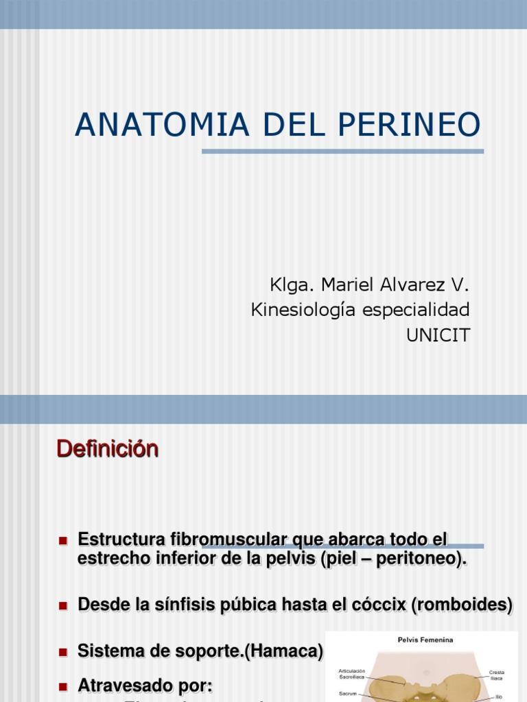 Anatomía del perinéo