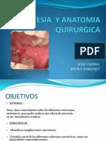 Anestesia y Anatomia Quirurgica