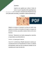 Bacilos Gram Negativo3