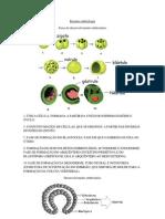 Resumo embriologia
