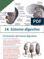 10.Sistema Digestivo