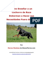 Como Enseñar a un Cachorro de Raza Doberman a Hacer sus Necesidades Fuera de Casa