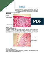 investigacion TESTÍCULO y prostata imagenes pre