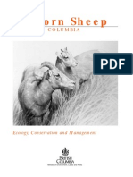 Bighorn Sheep in BC