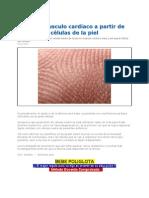 Crean_musculo_cardiaco_a_partir_de_células_de_la_piel