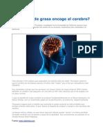 El Exceso de Grasa Encoge El Cerebro 2012