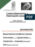 CadRespirat y Fosforil Oxid - MPAS - 2011